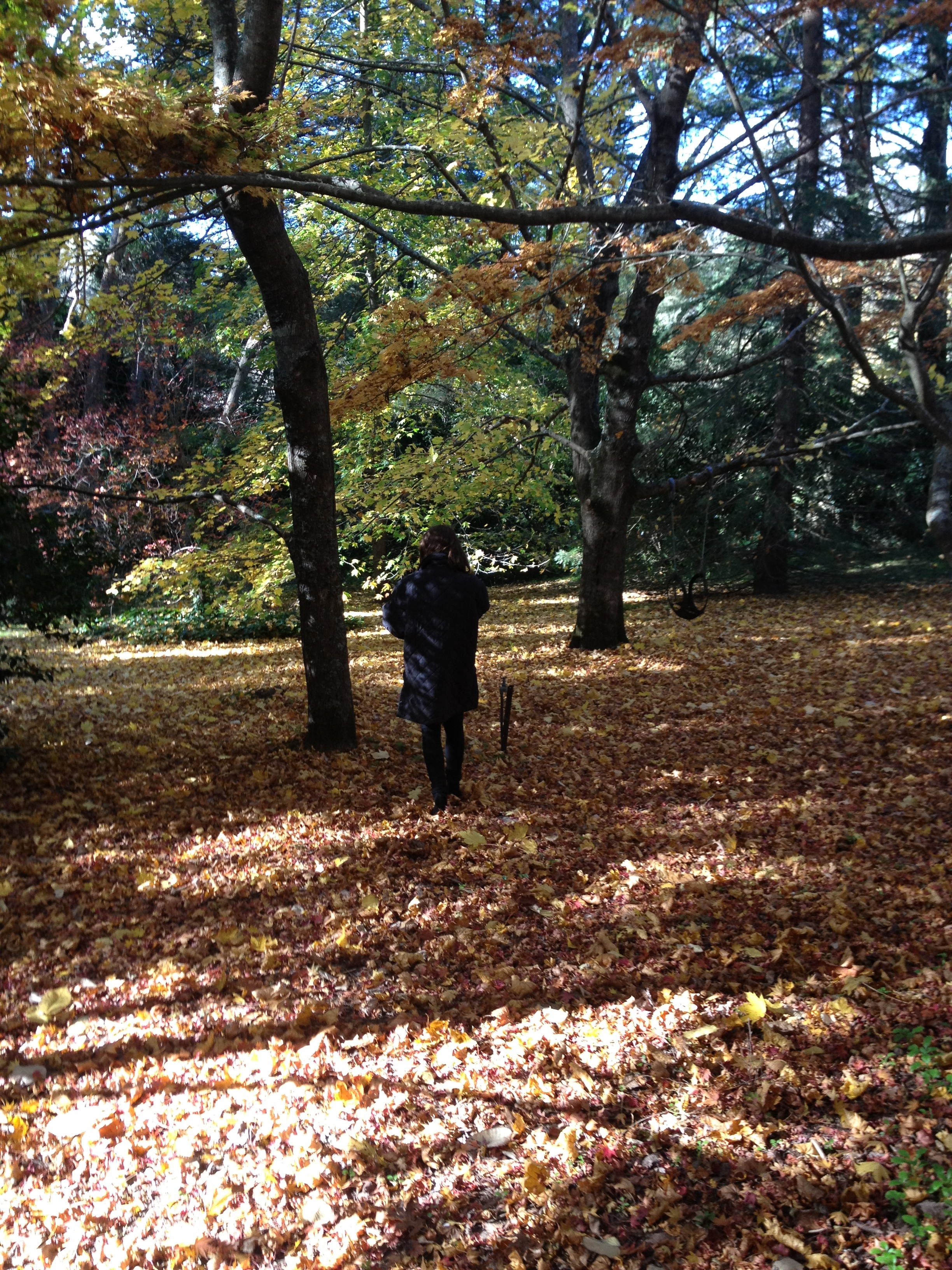 /images/southern_ highlands_leaves.jpg